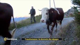 Transhumance : la descente des alpages