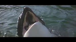 Highlights from 'Orca: The Killer Whale'