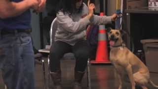 Second Chance Center For Animals Dog Training Classes