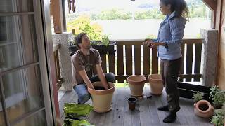 Container Gardening In Small Spaces - How To Grow Herbs & Vegetables On Your Balcony In Containers