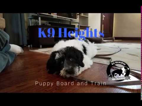 Board and Train Program | Puppy | K9 Heights