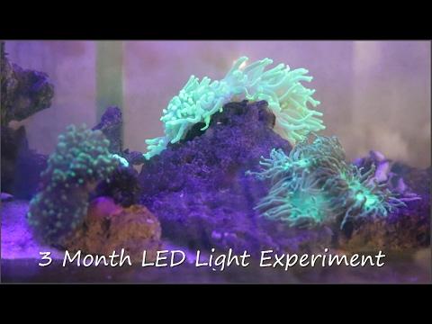 DIY LED Light Coral Growth Comparison