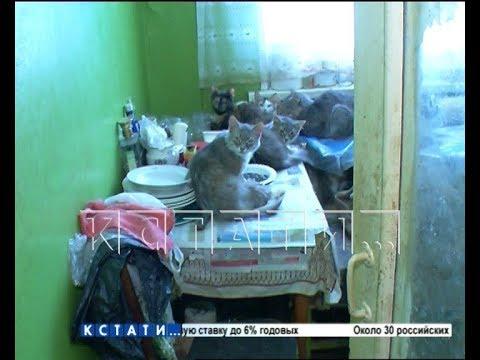 Любительница кошек в Заволжье превратила жизнь многоквартирного дома в настоящий кошмар