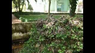 Dong Tam Snake Tree Vietnam