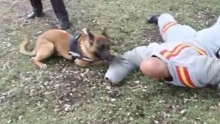 Así trabajan los guías caninos de la Policía Nacional