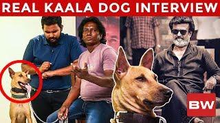 Kaala's Dog Mani is 2 Crores Worth Now! - Reveals Trainer Simon | Rajinikanth | US 181