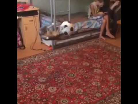 Cat knocking  soccer ball in the air