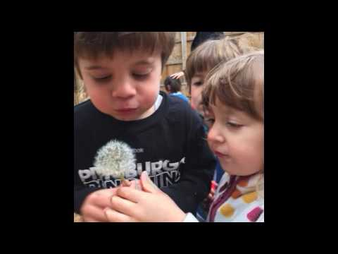 gallery video the grosvenor