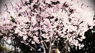 聴くと両想いになれるとウワサの曲!? 【PV】桃の花 feat.U-MIB/BIRTH thumbnail