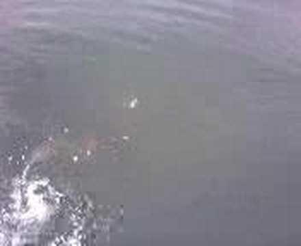 Al 39 s lower niagara river muskie 6 16 2007 youtube for Lower niagara river fishing report
