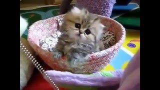 самые Смешные кошки, сладкие котята, Смешные приколы с кошками