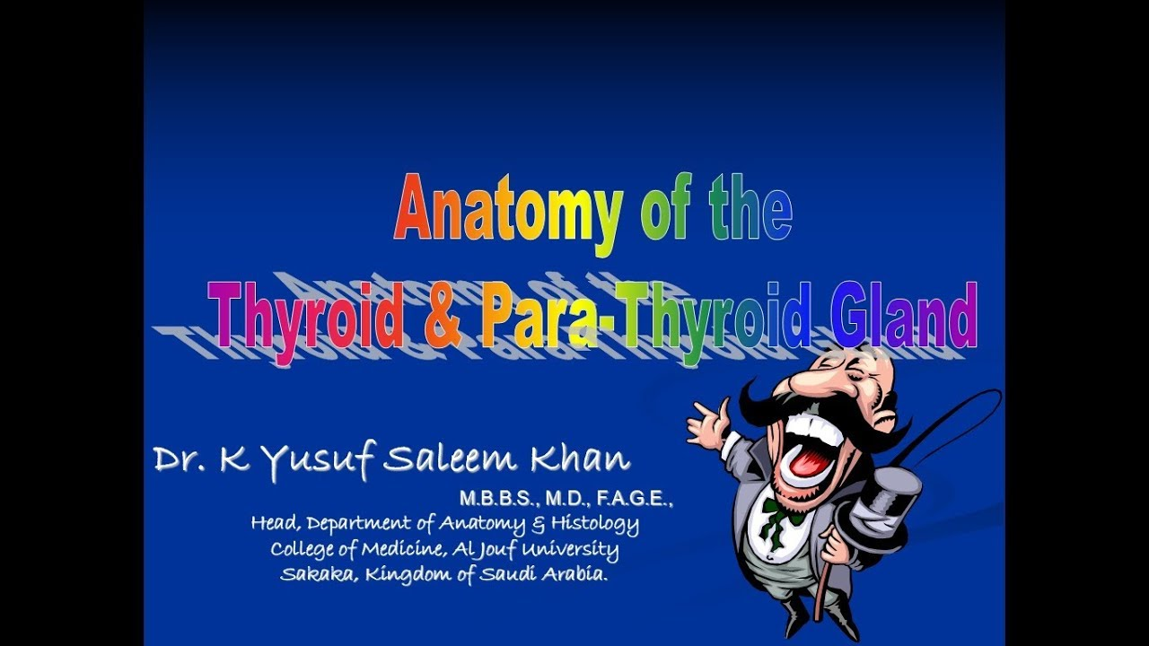 Lecture On Anatomy Of Thyroid Para Thyroid Glands Youtube