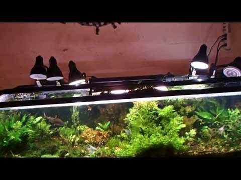 Importance of water flow, Wave maker on planted tank? Baby angelfish