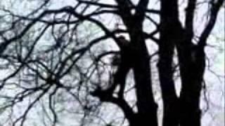 Фильм Дикие лесорубы..wmv