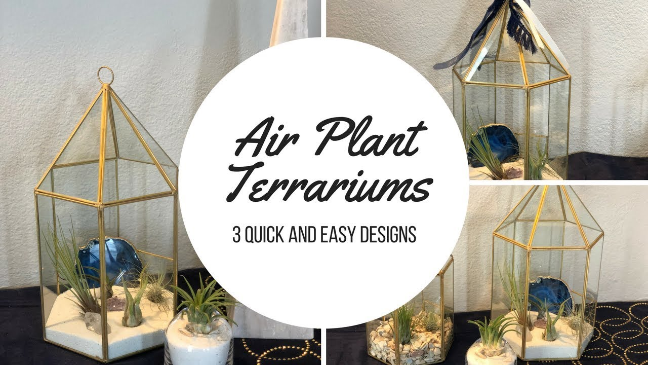Ideas for Displaying Air Plants | 3 Creative Ideas To Display Air ...