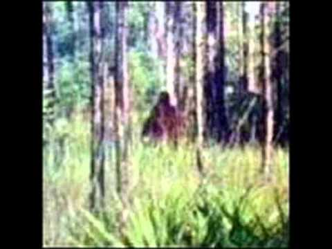 Skunk Ape Nights. a song for Ray