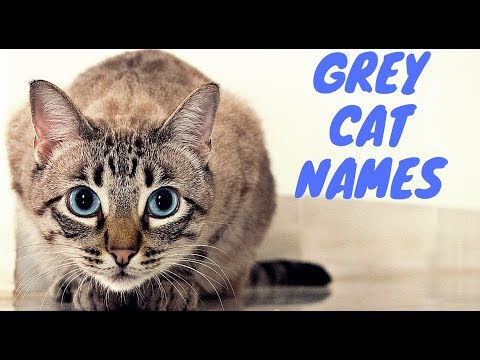 Grey Cat Names | Best 50 Names For Your Grey Cat
