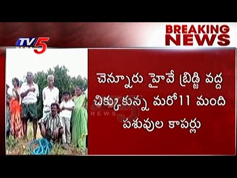Cattle Herders Stuck In Floods   Officers Tries To Rescue Them   Kadapa   Telugu News   TV5 News