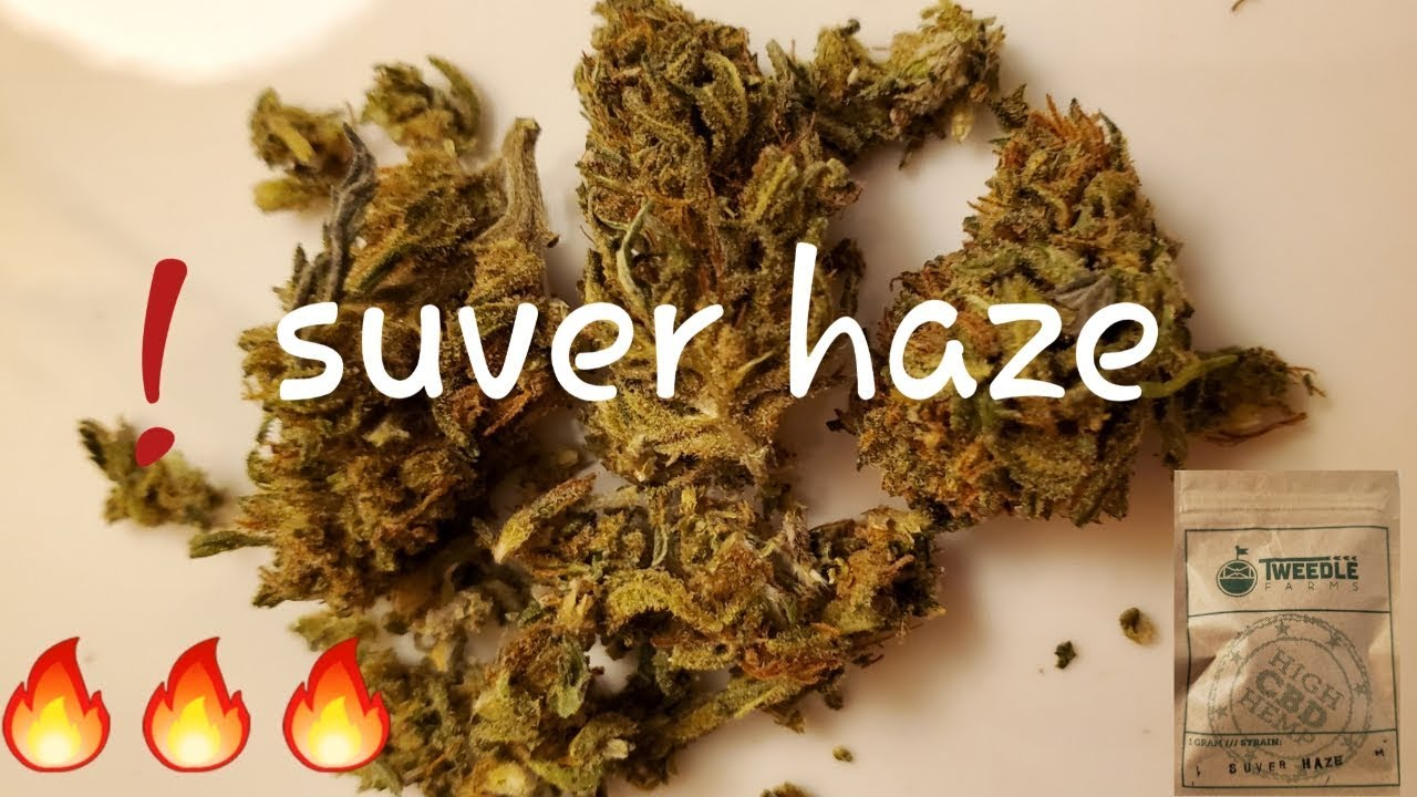 CAUTION 🔥🔥🔥💨 (SUVER HAZE) CBD hemp flower review