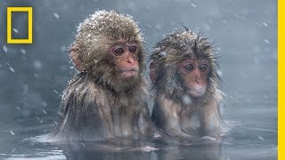 This World Animal Day, Celebrate the Beauty of the Animal Kingdom | National Geographic