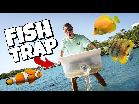 FIND YOUR OWN BAIT DIY FISH TRAP CHALLENGE! (CRAZY CATCH)