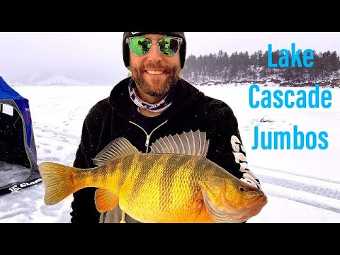 Lake Cascade Perch Fishing