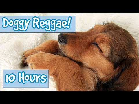 Reggae Music for Dogs and Puppies! Relax and Calm Your Dog with this Soothing sounds for anxiety