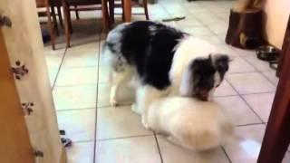 Eggs Is Learning Dog Body Language