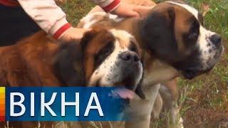 Как волонтеры, которые возвращались с фронта, спасли жизни собак   Вікна-Новини