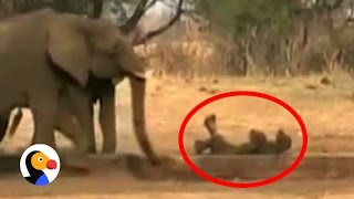 Baby Elephant Gets Stuck Upside Down Until...| The Dodo