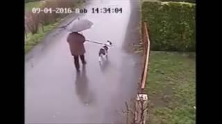 Боевые коты атакуют собак!