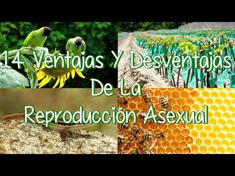Ventajas de la reproduccion sexual y asexual yahoo