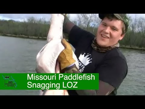 Missouri Paddlefish Snagging | Lake Of The Ozarks | Spoonbill Snagging