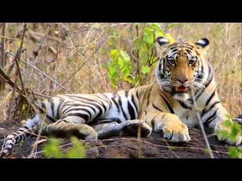 Best Wildlife safari Packages Kenya