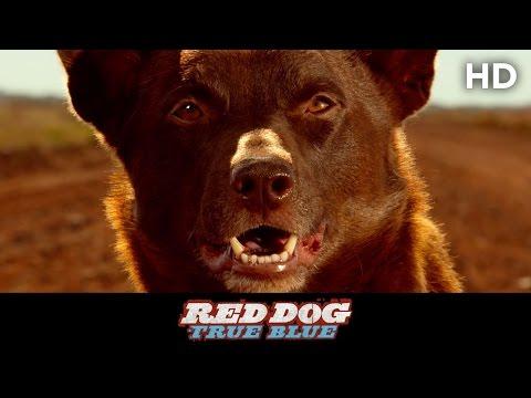 RED DOG: True Blue (2016) Celebration Clip [HD]