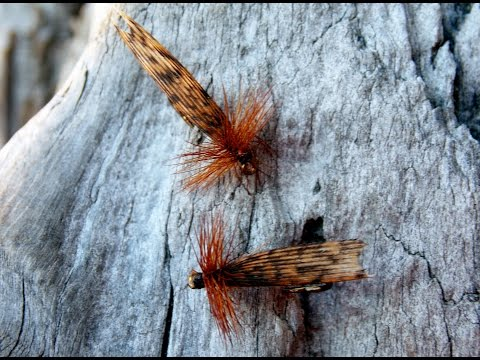 King river caddis fly tying instructions