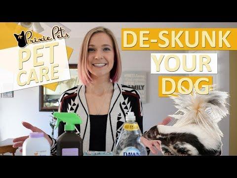 Dog Sprayed by Skunk - Remove Skunk Smell/De-Skunk Pets
