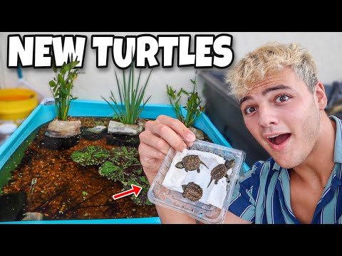 BUYING *NEW* BABY TURTLES For Mini POOL POND!!
