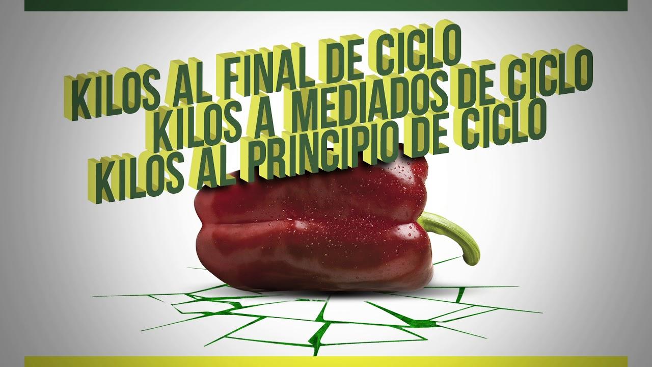 Pimiento lamuyo Orinoco ¡Kilos de calidad!