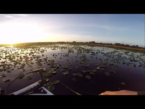 Fishing EPIC Florida Swamps For BIG Bass!!