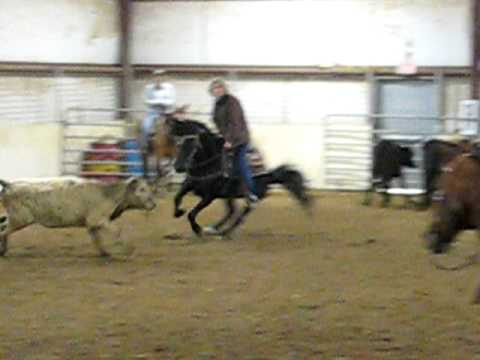 Morgan Horse cutting