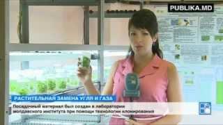 Молдавские исследователи высадили гигантский мискантус, используемый для производства биомассы(, 2014-08-13T06:39:58.000Z)