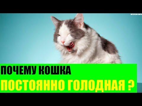 Вопрос: Почему кот постоянно убегает на несколько дней?