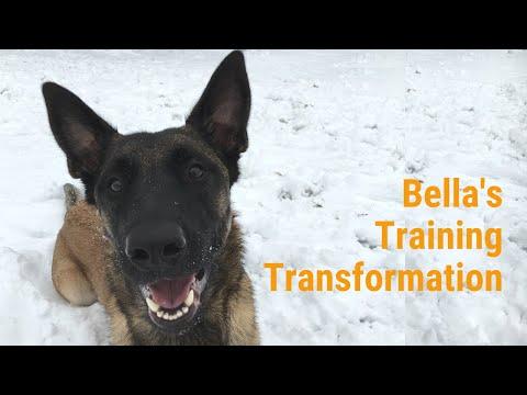 Bella's Board & Train Transformation: The Incredible K9