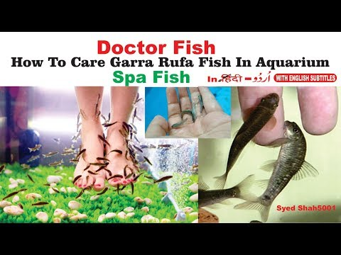 GARRARUFA Fish |Doctor FISH SPA Fish Care How To Care GARRARUFA Fish