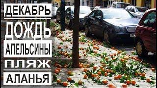 Турция: Апельсины бесплатно всем. Шторм и ливень в Аланье. Пляж и набережная. Погода в декабре