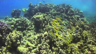 Sharm Beach Diving 2011 Part 3 of 3 Thumbnail