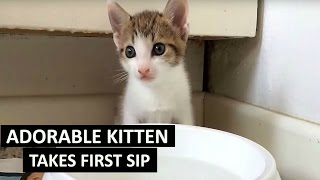 Kitten's first attempt at drinking water