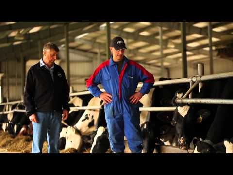 BC Dairy Farmers - Meet the Miedema Family