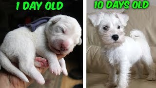 My baby puppy grew up SO FAST! (Cutest dog)